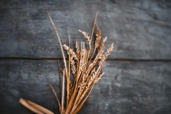 przepisy z mąką pszenną