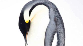 Rok wśród Pingwinów Wyspa Kobiet