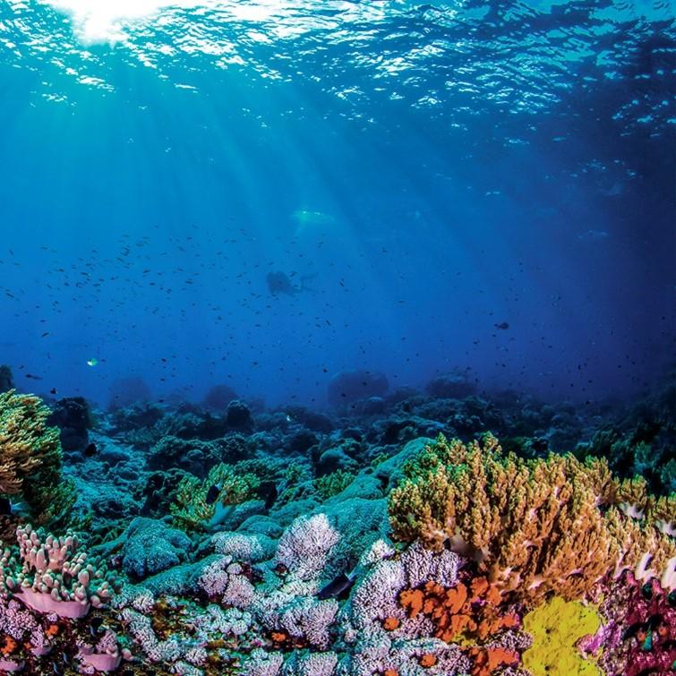 ŚWIATOWY DZIEŃ OCEANÓW wyspa kobiet